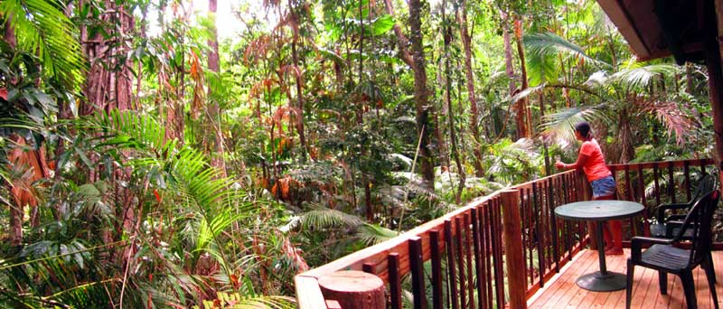 rain forest views from your accommodation