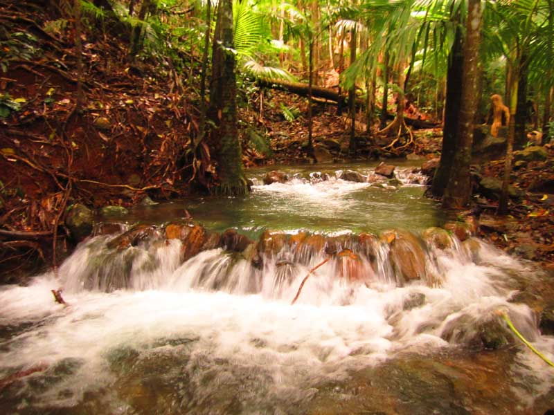 a beautiful creek runs past this accommodation in the daintree
